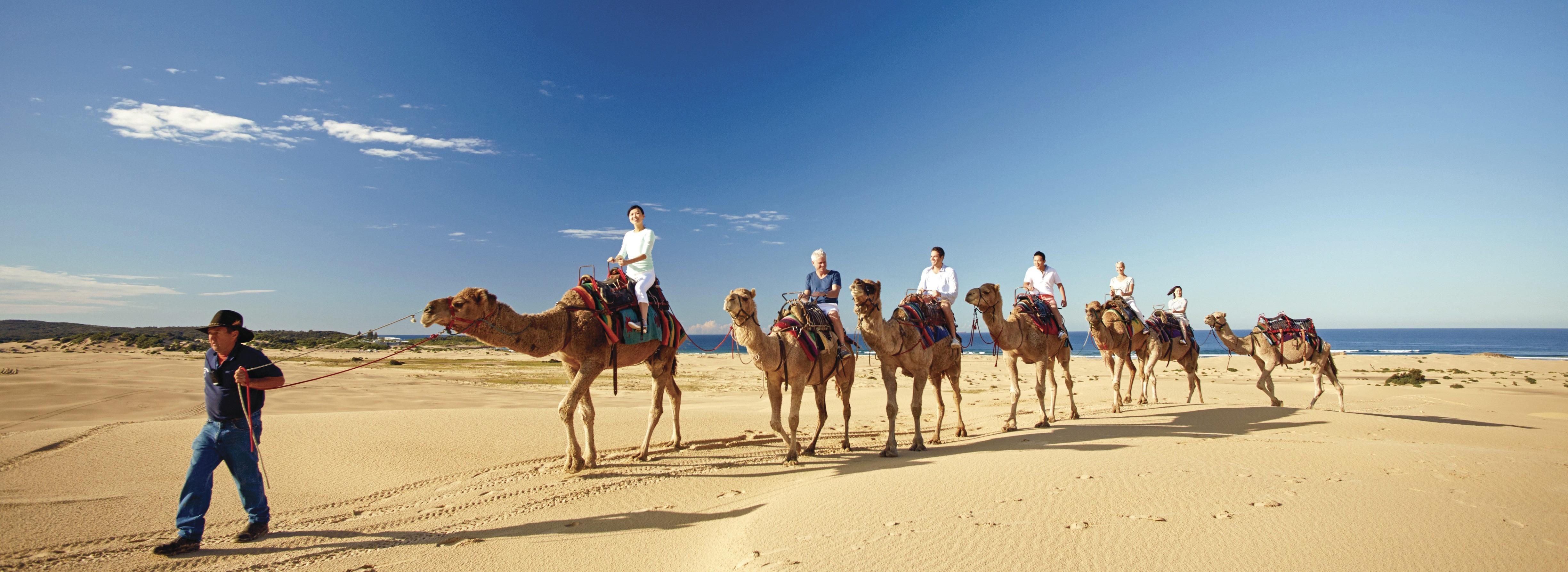 Tour cưỡi lạc đà Port Stephen Úc