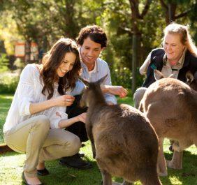 Vườn thú Healesville