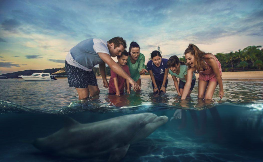 Dolphin in Moreton Island