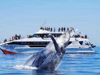 Tour xem cá voi ở Úc